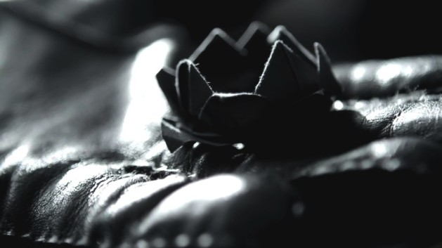 black-lotus-1024x576 (1)